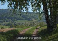 Wanderweg ins Grüne