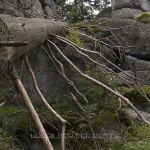 Dreisessel - Windwurf im Bergwald