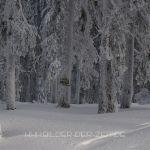 dreisessel-winter-2008-09-5