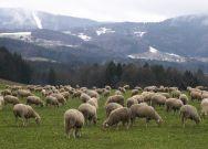 Weidepflege (Foto: Waltraud Schmöller, Verkehrsamt Lallinger Winkel)