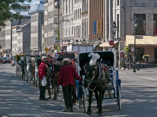 view-montreal-pferd