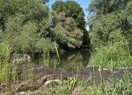 Wildwuchs am Rande der Donau