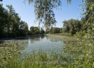 Altwasser der Donau